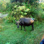 На пути.Национальный парк Яла.Сафари