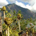 Пейзажи Индонезийских островов