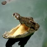 Фауна Индонезийских островов,крокодилы