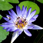 Флора Индонезии