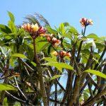 Флора Индонезии...