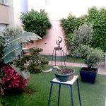 Наш отель-сад бонсай и пальм