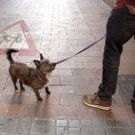 Собаки Барселоны 1