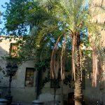 Улочки Барселоны, пальмы