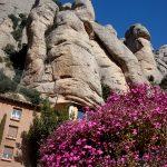 Цветы, цветы,цветы... Монтсеррат 2