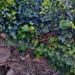 Сады Жироны 3