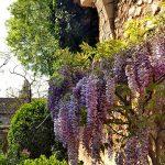 Сады Жироны - Глициния