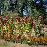 Переяслав-Хмельницкий, пейзаж, заказать картину- флора