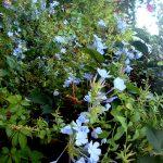 Сад отеля, Цветы