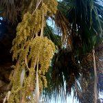 Сад отеля, пальмы