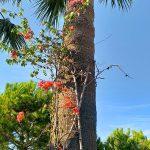 Сад отеля, пальмы 1