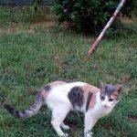 Священные для турков животные, живущие в отеле. Кошки