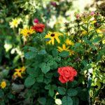 Цветы усадебные красивые )