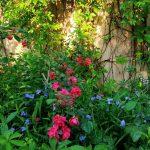 Цветы усадебные ).