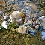 Тече вода,тече бистра i чиста