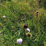 Цветочки и бабочки прикарпатские ).