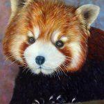 Малая панда, холст,масло,60х80см 2018-19гг-Олег М.Караваев